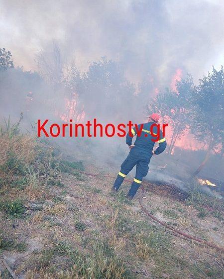 Φωτιά στο Κιάτο κοντά σε κατοικημένη περιοχή (vid)
