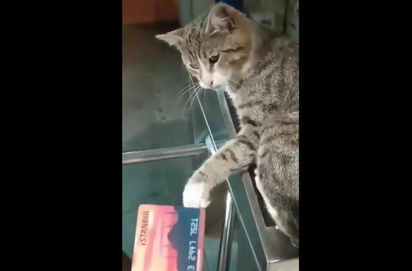 Viral: Αντιδρούν οι… γάτες για τη νέα κάρτα συγκοινωνιών στην Κωνσταντινούπολη (vid)