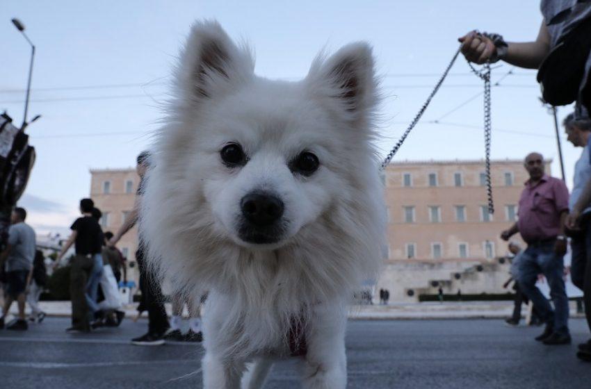 """Απειλητικό σημείωμα σε πολυκατοικία εναντίον ενοίκου: """"Θα σκοτώσω το σκυλί σου"""""""