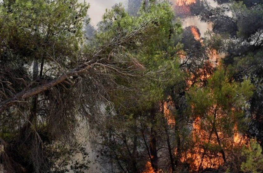 Κόρινθος: Μια σύλληψη για την φωτιά στο Καλέντζι