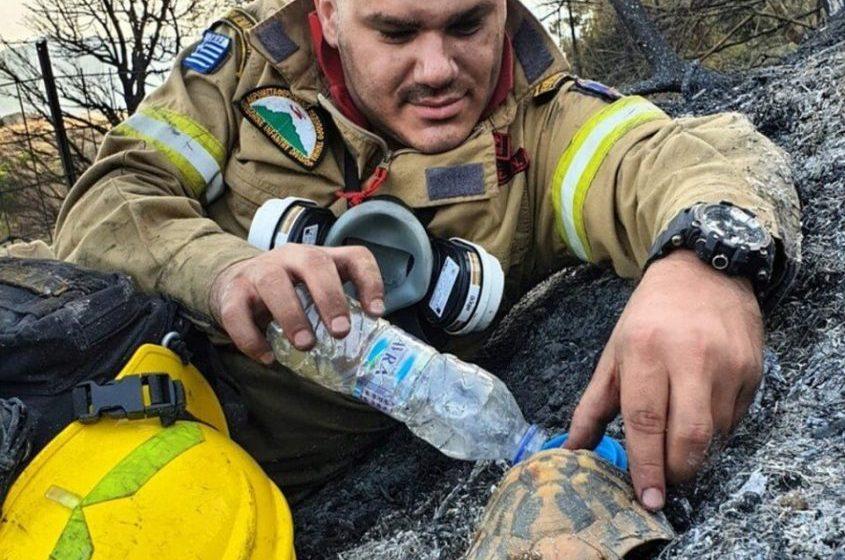 VIRAL: Η φωτογραφία του πυροσβέστη με την διψασμένη χελώνα στην Πάτρα