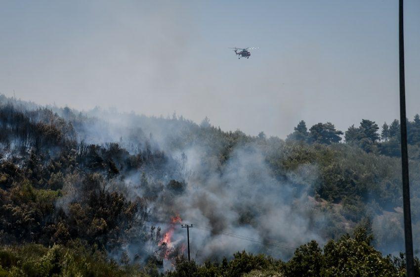 Θεσσαλονίκη: Υπό πλήρη έλεγχο η πυρκαγιά στο Βαθύλακκο