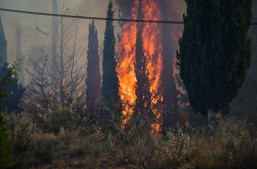 Πυρκαγιές στην Αχαϊα: Εκκενώθηκαν πάνω από δέκα χωριά – Ζημιές σε σπίτια και τέσσερις τραυματίες