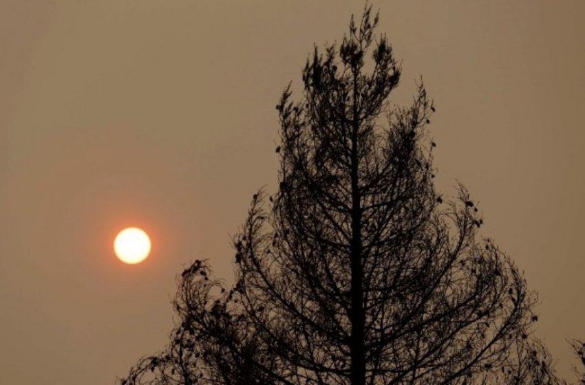 Ιταλία: Κύμα καύσωνα και πυρκαγιές