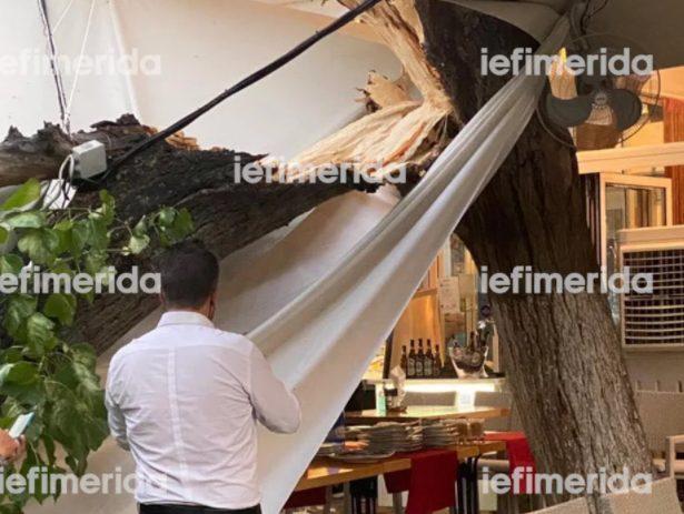 Έπεσε δέντρο σε εστιατόριο που έτρωγαν Μενέντεζ – Πάιατ στο κέντρο της Αθήνας (εικόνα)
