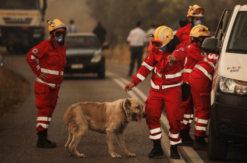 """Η απάντηση της """"I love dogs"""" για τις καταγγελίες σχετικά με την φιλοξενία ζώων κατά την μεγάλη πυρκαγιά στην Βαρυμπόμπη"""