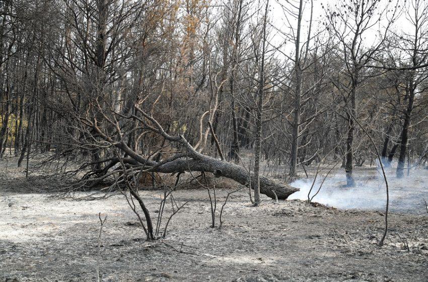 Φωτιά στη Βαρυμπόμπη: Οι εικόνες της καταστροφής από ψηλά