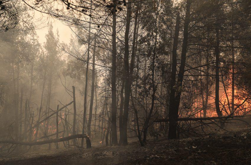 Λέκκας: Στην Εύβοια 300.000 στρέμματα δάσους έχουν καταστραφεί ολοσχερώς