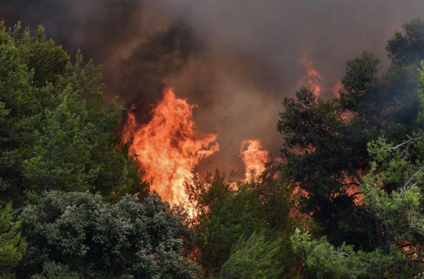 Φωτιά σε δασική έκταση στη Φθιώτιδα