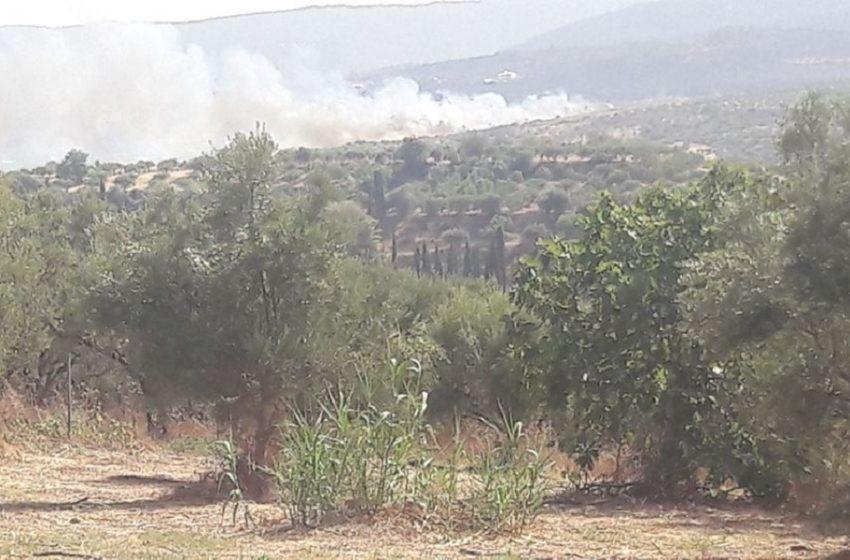 Μεσσηνία: Αναζωπύρωση της πυρκαγιάς στο Βασιλίτσι – Νέα φωτιά στη Μέλπεια