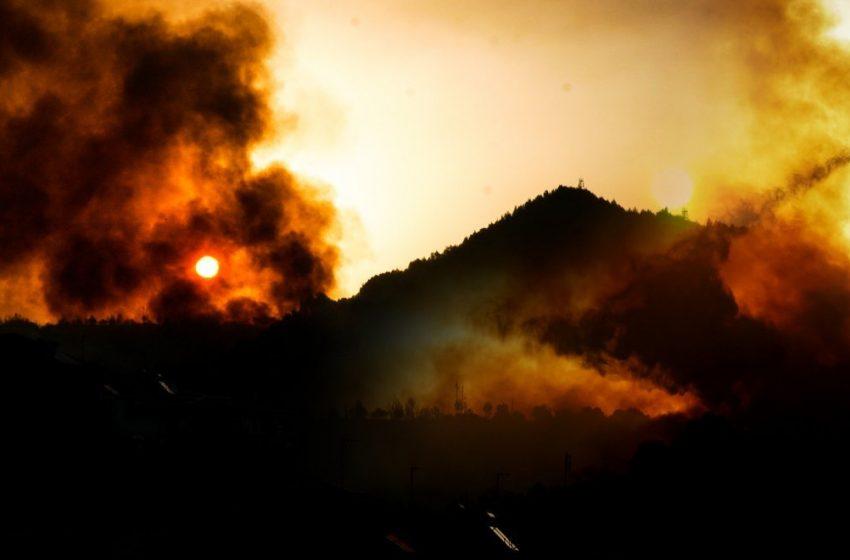 Πανελλήνια Ένωση Δασολόγων: Επιεικώς ανεπαρκής η διαχείριση στις πυρκαγιές- Να εφαρμοστεί το πόρισμα μετά τις καταστροφές του 2007
