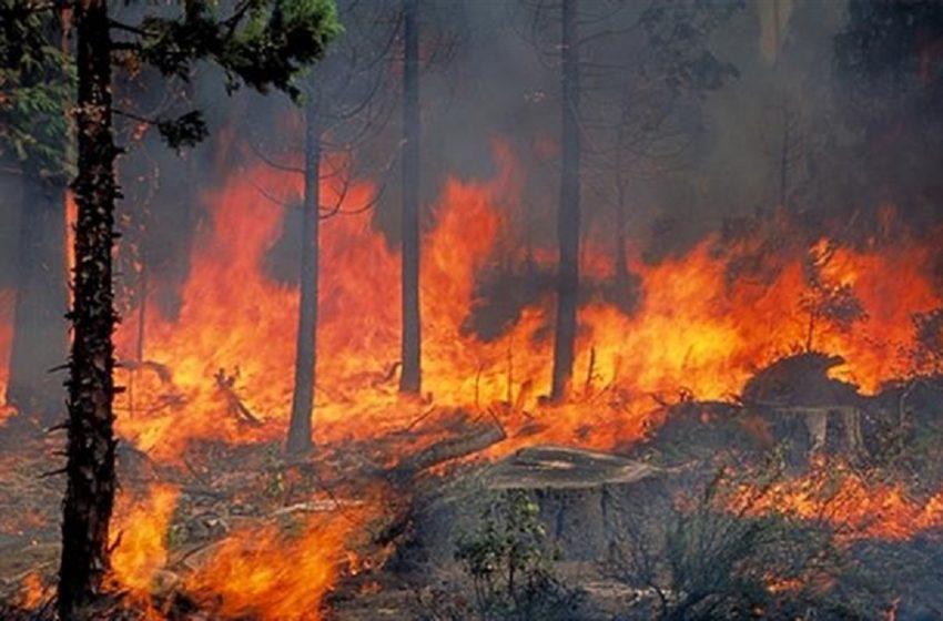Λάρισα: Σε πλήρη εξέλιξη πυρκαγιά στο Δίλοφο Φαρσάλων
