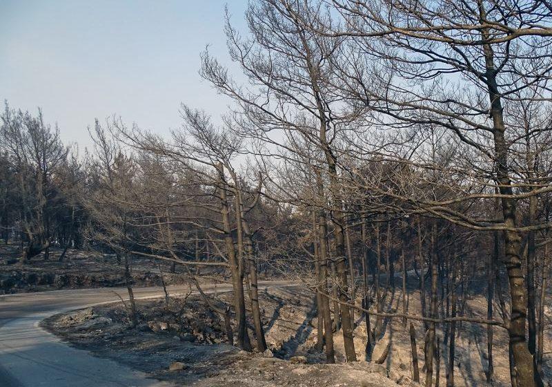 Ρόδος: Αναζωπύρωση στην περιοχή Καλαμώνας