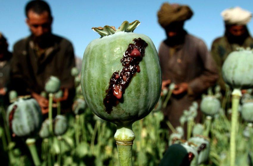 Από που προέρχονται τα έσοδα των Ταλιμπάν – Όπιο, ηρωίνη, εγκληματικές ενέργειες