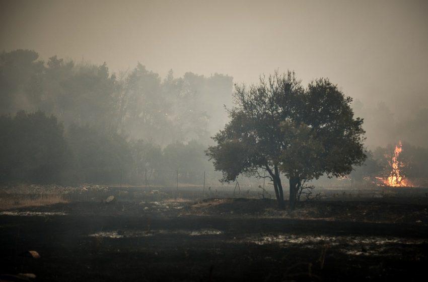 Ανυπολόγιστη η καταστροφή στα Βίλια – Καίει για 5η μέρα η φωτιά, η μάχη επικεντρώνεται στο νότιο μέτωπο προς τα Μέγαρα (vid)