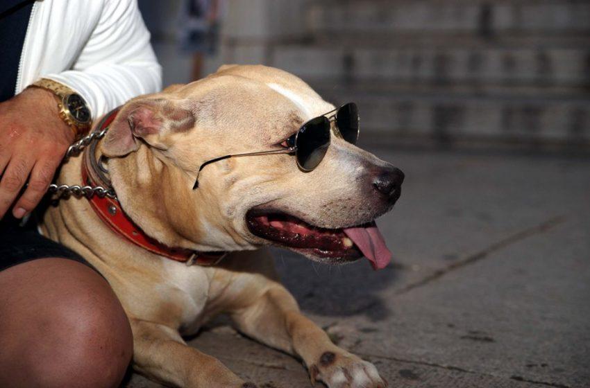 Ζώα συντροφιάς: Σφοδρές αντιδράσεις για το νομοσχέδιο – Την απόσυρσή του ζητά η Φιλοζωϊκή Ομοσπονδία