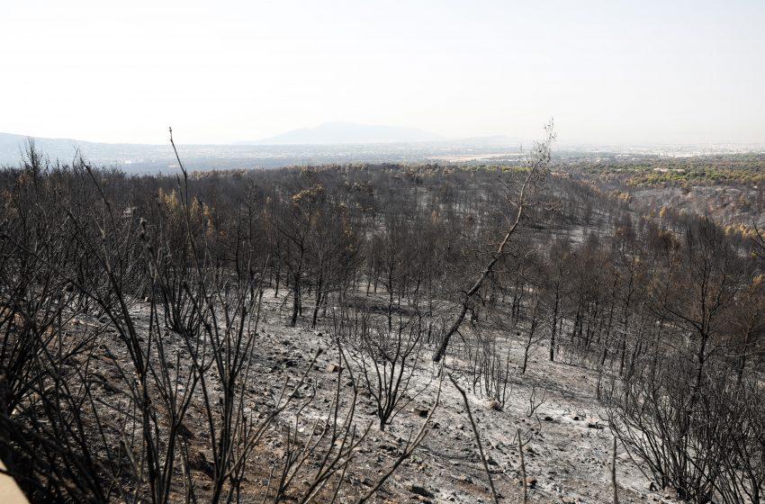 Meteo Αστεροσκοπείου: Οι πρόσφατες πυρκαγιές έκαναν στάχτη το 16% των δασών της Αττικής