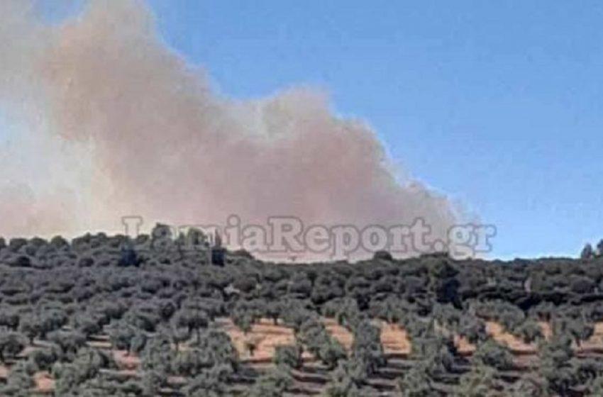 Φωτιά στην Αταλάντη -Επιχειρούν επίγειες και εναέριες δυνάμεις