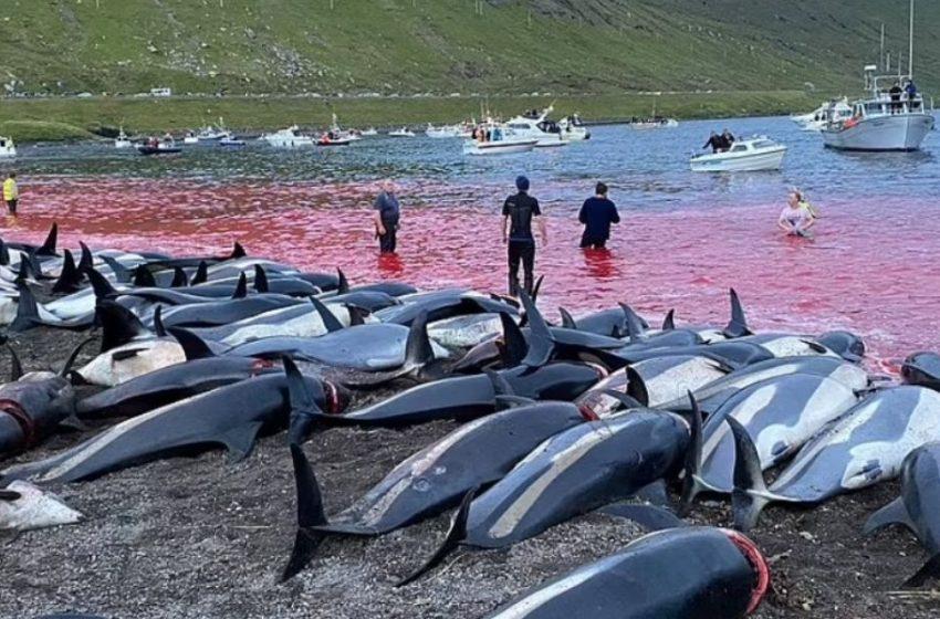 Οργή για την μαζική σφαγή στα νησιά Φερόε- Σκότωσαν 1.500 δελφίνια για το…έθιμο – Εικόνες σοκ