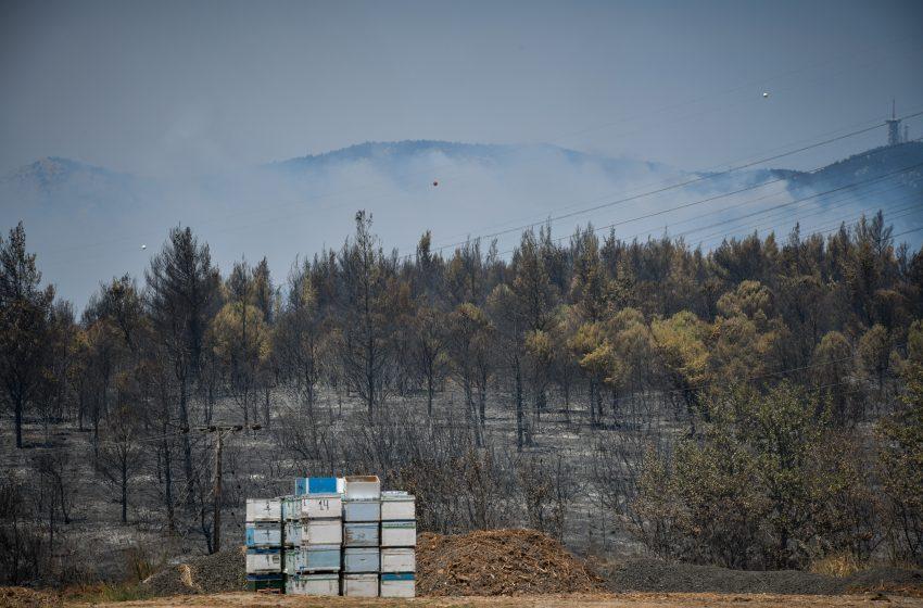 """Αποζημιώσεις και για τα ανασφάλιστα μελίσσια που κάηκαν στις πυρκαγιές – Δημιουργία επιτροπής για το """"Plan BEE"""""""
