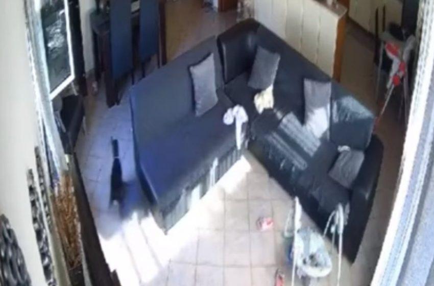 Σεισμός: Τρομοκρατημένο σκυλάκι μόνο στο σπίτι τρέχει να σωθεί (vid)