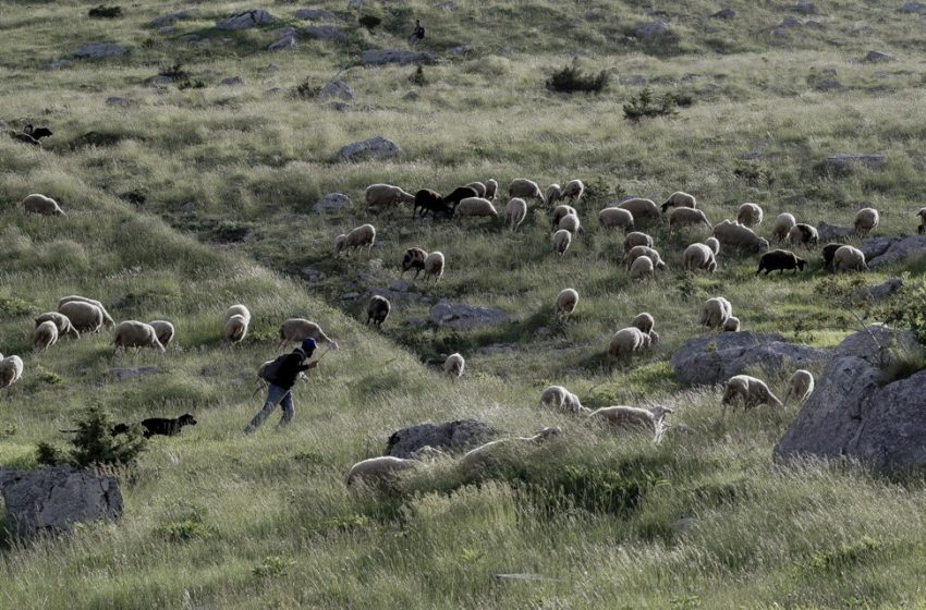 Θρίλερ στη Λαμία: Αγνοείται βοσκός