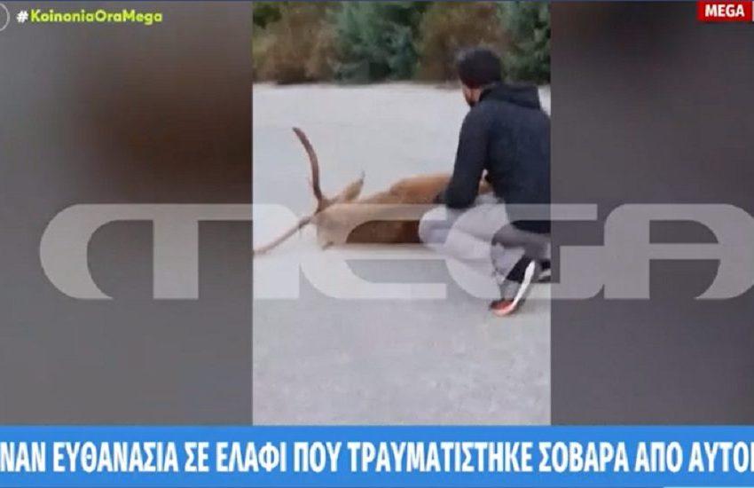 Δασαρχείο Πάρνηθας: Άφησαν ελάφι να ψυχορραγεί επί τρεις μέρες στη μέση του δρόμου (vid)