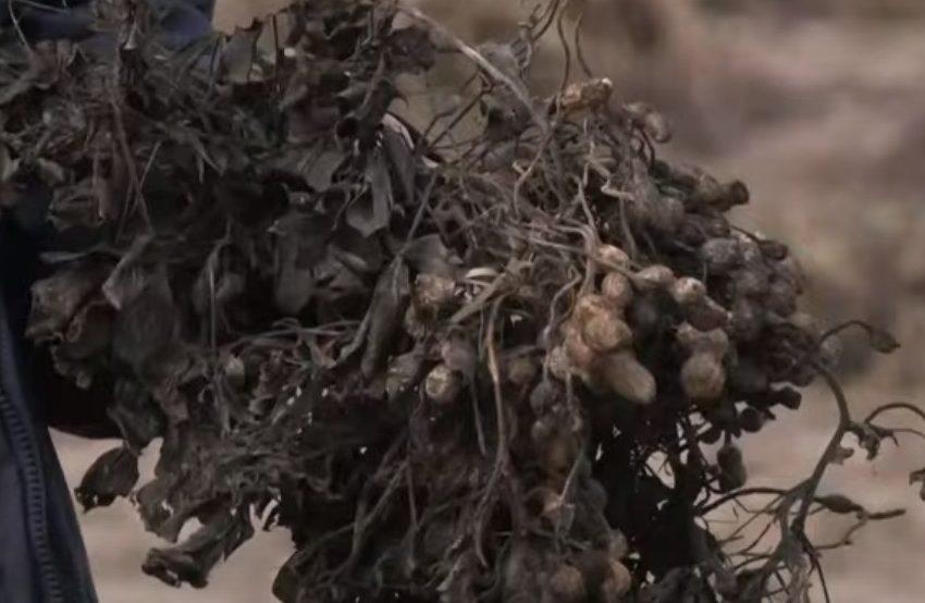 """Σέρρες: Σε απόγνωση οι αγρότες από τις καταστροφές του """"Μπάλλου"""""""